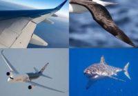 Airbus se inspira en la piel del tiburón para diseñar alas