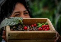 Panamá cuenta su historia cafetelera